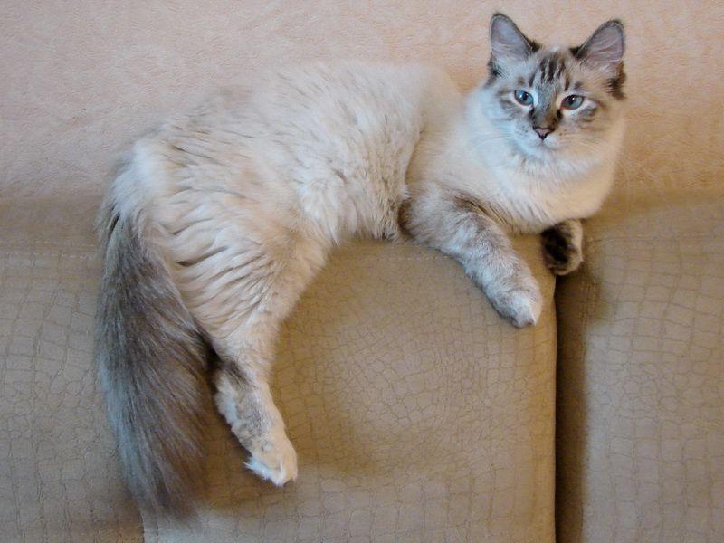 Куплю кота в комсомольске на амуре