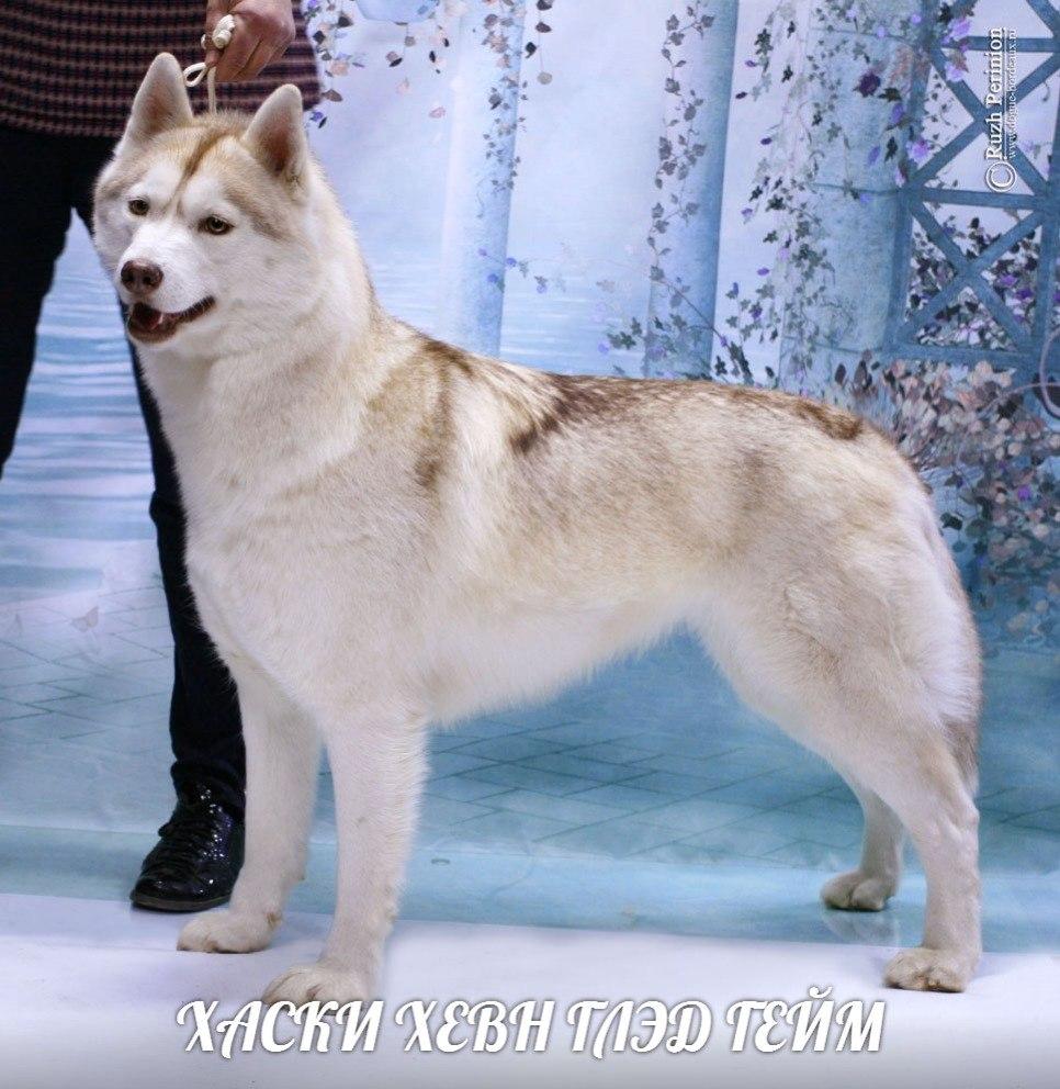 Разместить объявление бесплатно о пропаже собаки в волгограде свежие вакансии в с-пб от 13 03 2009