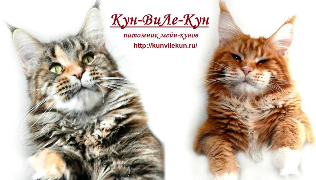http cats xbubs ru sahna-bezaklari-to-y-uchun html