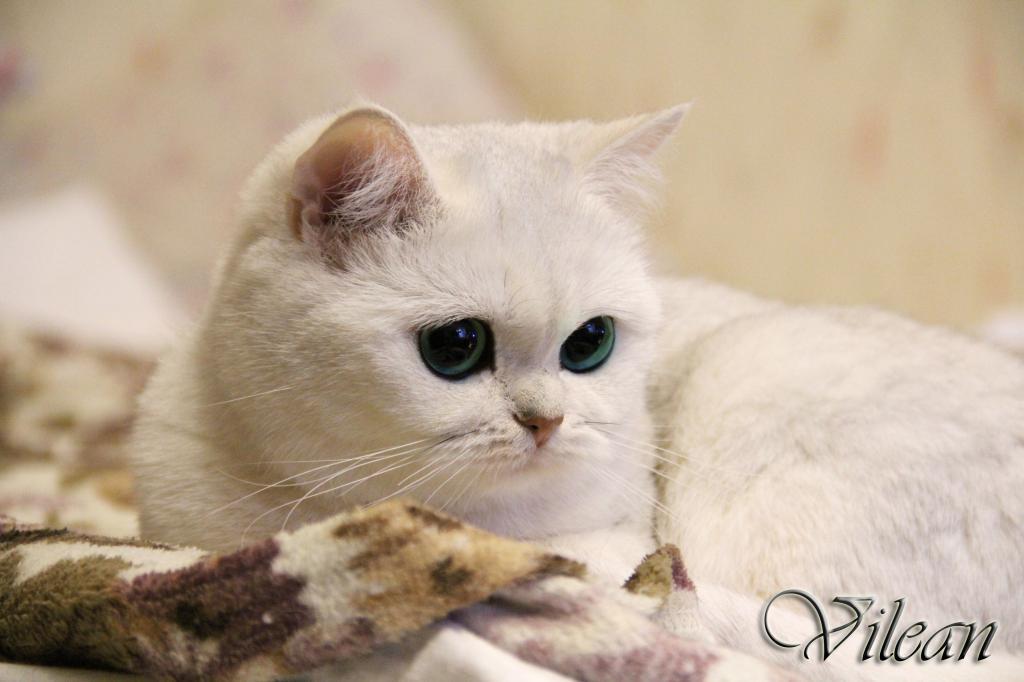 Питомники для котов в спб